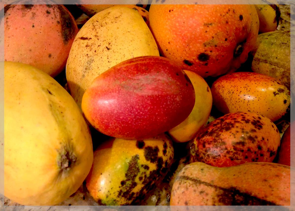Как дозреть манго в домашних условиях