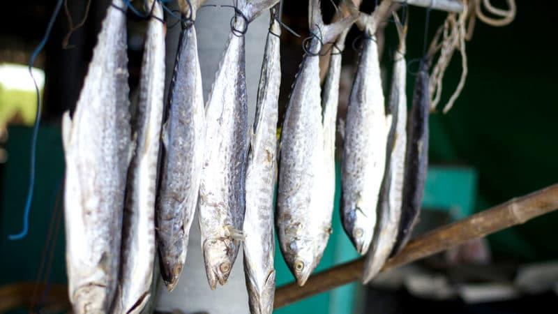 хранение рыбы на веревке