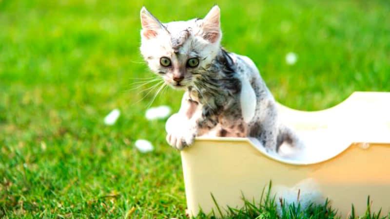 купание котят