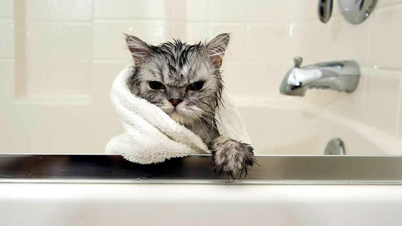 купание котят шампунем
