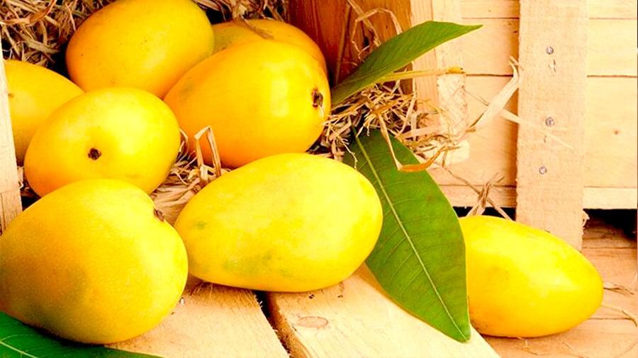 как хранить манго дома