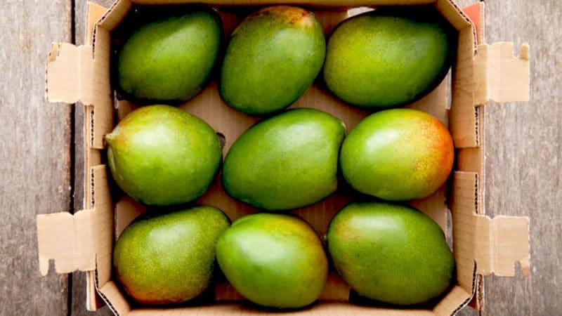 как и где хранить манго