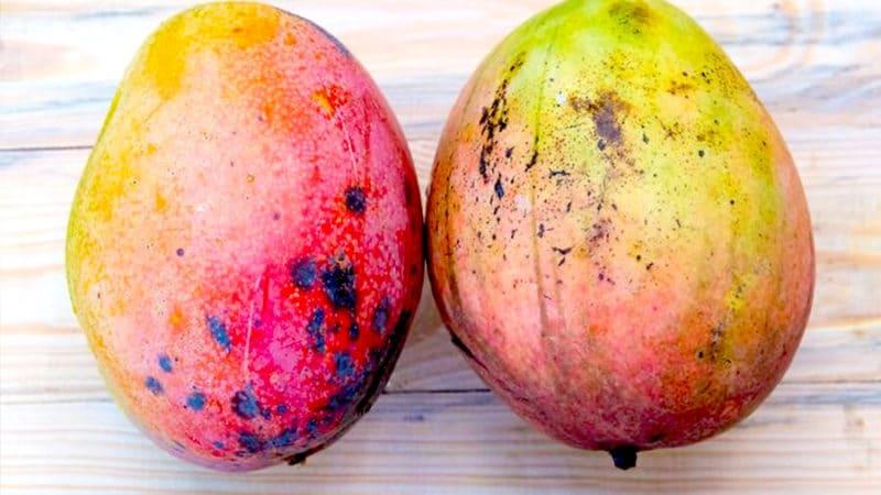 выбираем манго